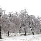 Little Ice Trees All In a Row by Linda Miller Gesualdo