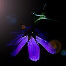 Flower Lighting - Watercolour by L. Haverkamp