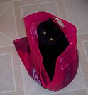 Don't let the cat out of the bag.. by Kayleigh Walmsley