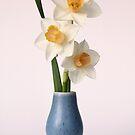 three daffodils in a blue vase by OldaSimek