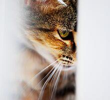 Watchful Eye by Jenni Greene