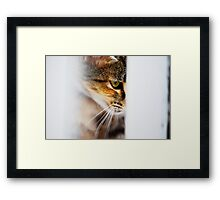 Watchful Eye Framed Print