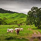 Greenfields,O'Çonnell River, Qld by Tim Wootton