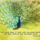 Peacock with verse by Deborah Berry
