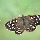 Speckled Wood Butterfly by Teuchter