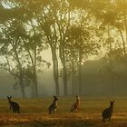 Early one morning just as the sun was rising by myraj