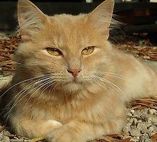 Feral cat by AleFletcher