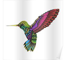 Color Ornate Colibri Poster