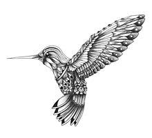 Ornate Colibri by psydrian