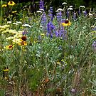 Mixed Wildflowers in Spring by AudraJS