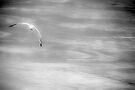 Gull by Mary Ann Reilly