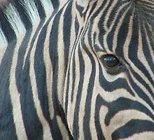 ZEBRA MAGIC by Antionette
