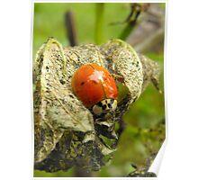 Ladybug Hideaway Poster