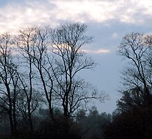 Trees silhouette by Antanas
