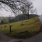 sheep on a hill by alan700