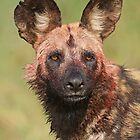 Painted Dog by jozi1