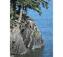 In between tree roots and sea is the rock Photographic Print
