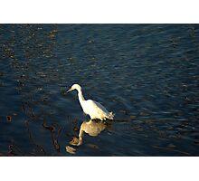 White Crane Photographic Print