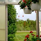 VIEW FROM THE GREENHOUSE by goddarb
