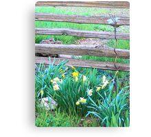 Split Rails and Daffodils Canvas Print