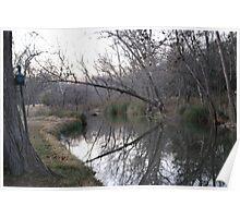 Cypress Creek View Poster