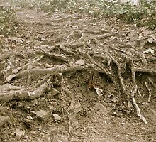 Tree roots by nclose21