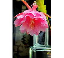 Pink Tutu In A Flying Leap Photographic Print