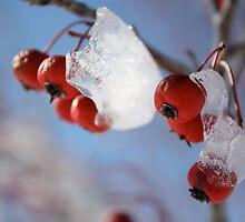Frozen Berries by Amanda Yetman