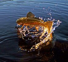 Gold Plated Trout by Brian Pelkey