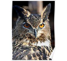 Max the Eurasian Owl Poster