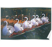 Swan Boats at Sunrise Poster