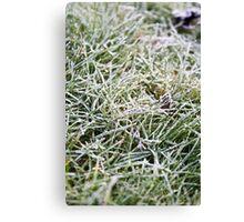 Frosty Grass Canvas Print