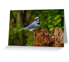Blue Jay on Stump - Ottawa, Ontario Greeting Card