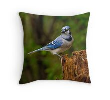 Blue Jay on Stump - Ottawa, Ontario Throw Pillow