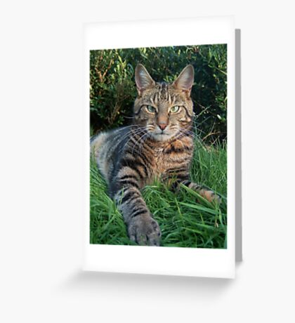 The Tiger In The Grass Greeting Card