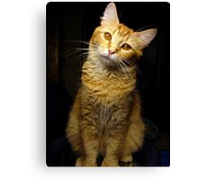 What are you talking about? Canvas Print