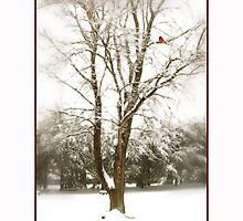 My Little Red Cardinal by Trudy Wilkerson