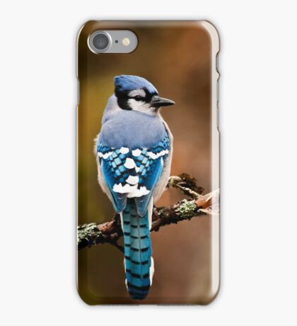 Blue Jay On Branch iPhone Case/Skin