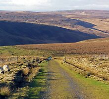 Yorkshire Moors by walshetta