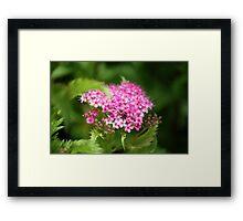 Sprinkles of Pinkles Framed Print