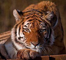 I really love those tiger feet!!! by Shaun Whiteman