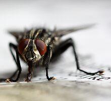Fly on newspaper by Ellen van Deelen