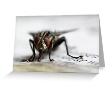 Fly on newspaper Greeting Card