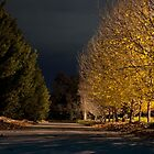 Night Light by eclectic1
