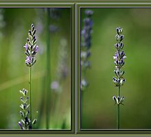 Lyrical Lavender Diptych by WalnutHill