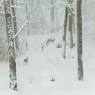 Herd of Deer on a Snowy Day by Jean Meile