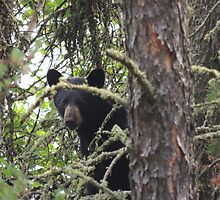 A Young Bear Just Checking In! by Spencer Pauls