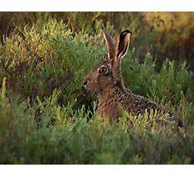 Hare at Homebush #1 Photographic Print