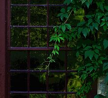 Old Window Wrapped With Vines by Vy Solomatenko