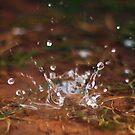 Droplets of Water by Pamela Maxwell